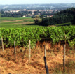 vignoble de Saint Emilion